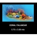 Coral Palancar