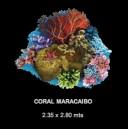 Coral Maracaibo