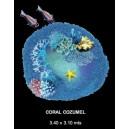 Coral Cozumel